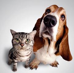 Pet Trust pet estate planning